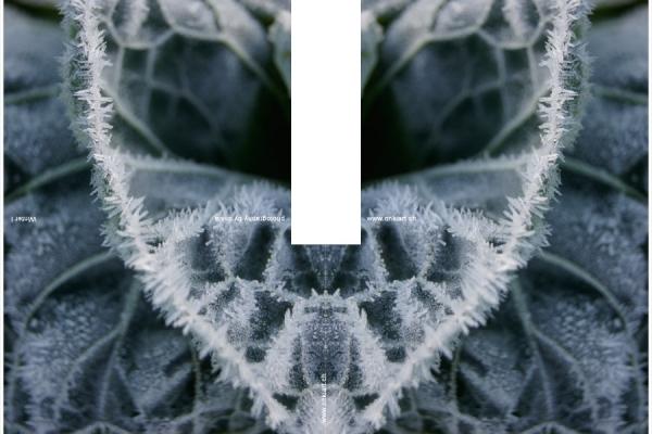 18-winter1FE8E365C-DE82-B678-03C4-F17F9C435956.jpg